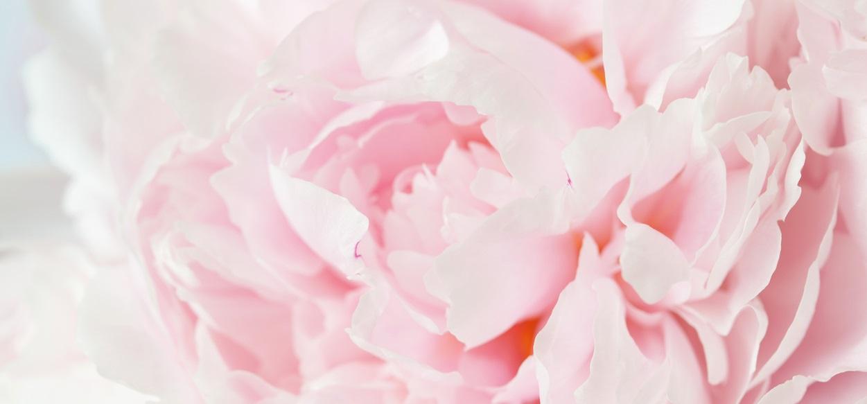 Flower & Co Boutique
