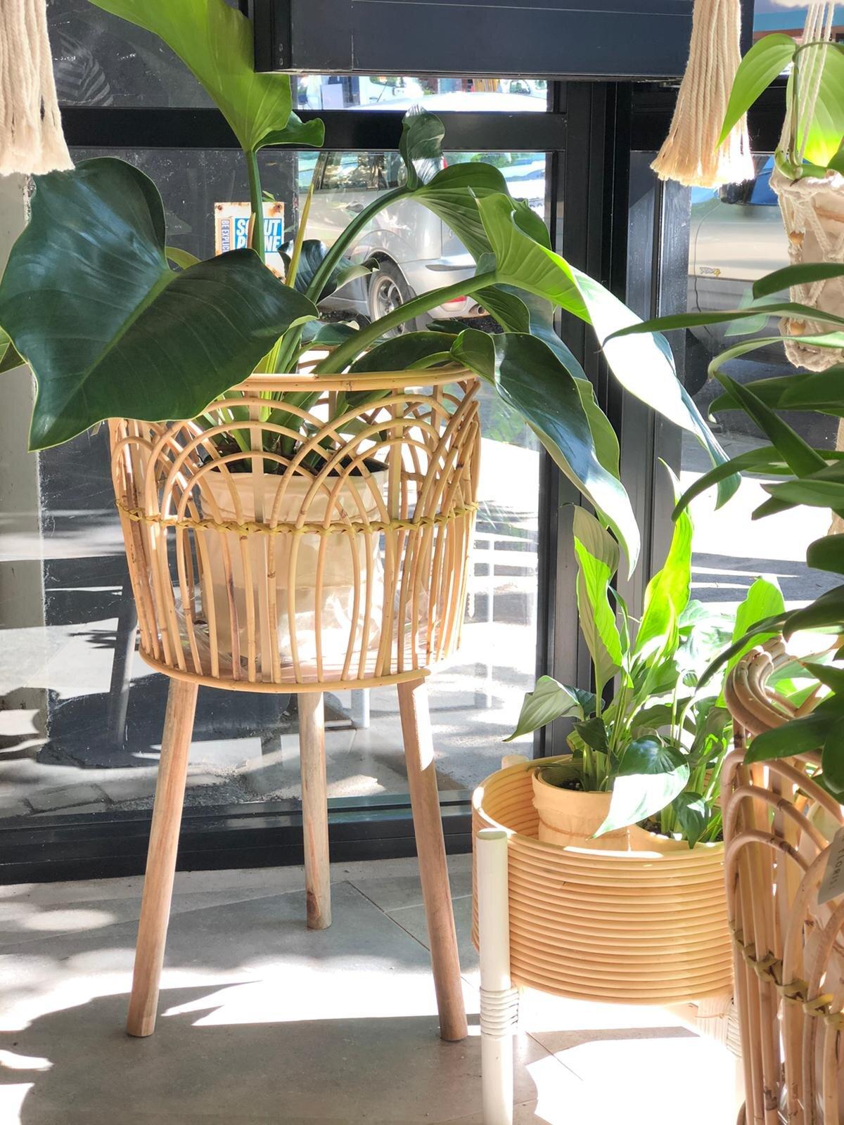 Indoor Plant - Uniting Flowers Australia